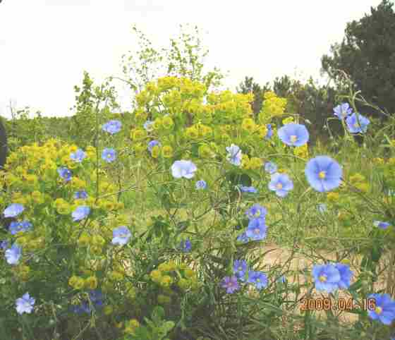 Цветочная поляна в Молдавии