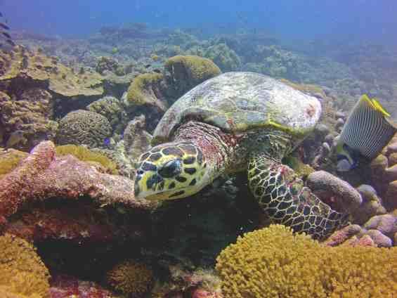 Подводный мир в прибрежных водах страны Сейшелы