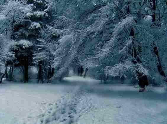 Зимний лес в Болгарии
