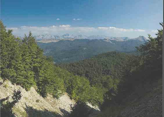 Леса на высокогорье. Черногория.
