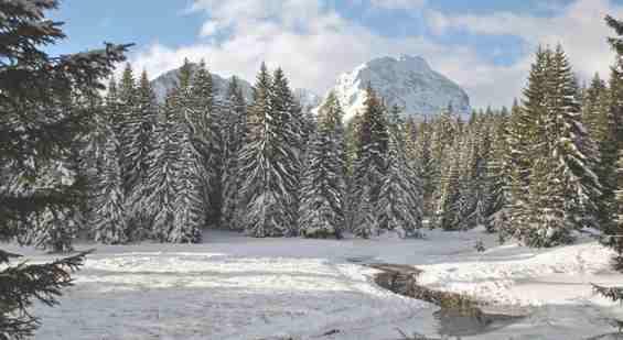 Черногория. Зимний лес