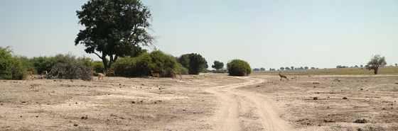 Дальняя дорога в африканской стране Ботсвана