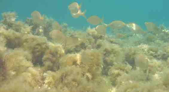 Подводный мир Эгейского моря