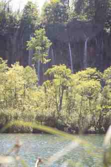 Лес в стране Хорватия