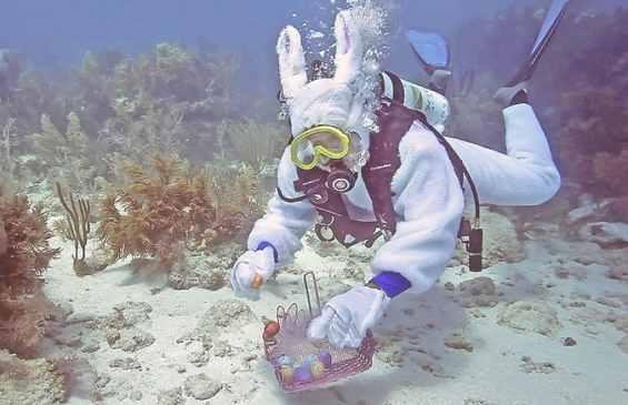 Флорида-Кис. Аквалангист на дне залива среди кораллов