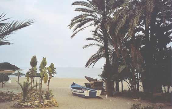 Марбелья. Испания. Пальмы на побережье