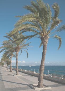 Великолепные пальмы на побережье Испании